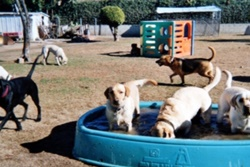 pet daycare in huntington beach